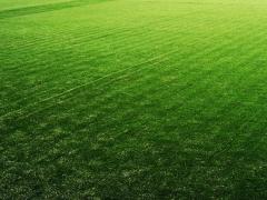 人造草坪3